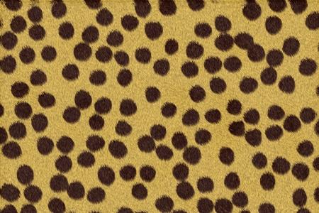 sported: Cheetah skin Stock Photo