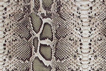 poison snakes: Snake Skin