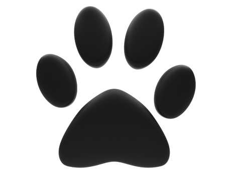 wild cat: Paw print isolated on white background.