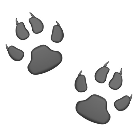huellas de animales: Impresiones de la pata
