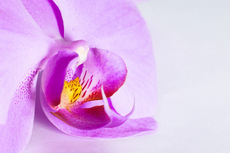phal: Tropical pink orchid isolated over white background