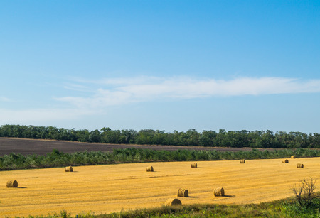Field with stacks of hay forest and blue sky