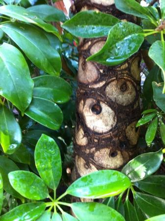 arbol: Brown un �rbol verde de la naturaleza