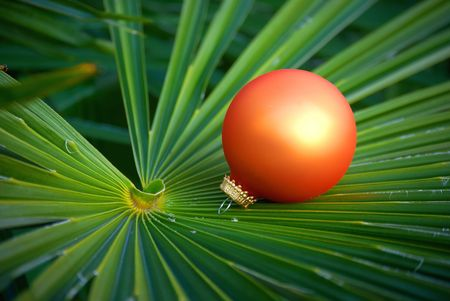 tropical christmas: Christmas ornaments located on the palm tree leaf  - it�s green winter.