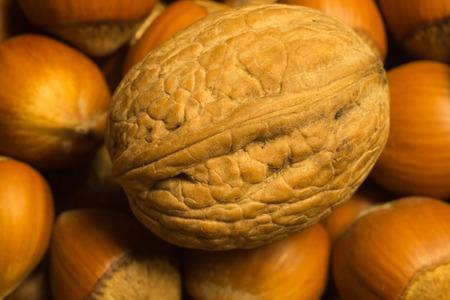 Walnut and hazelnuts macro