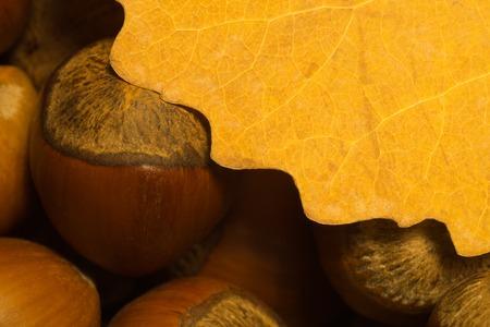 Autumn leaf and hazelnuts macro background. copy space