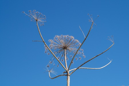 Nature landscape with dry plants Imagens - 119502353