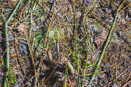 Ground in the forest. forest soil with grass and twigs. nature background