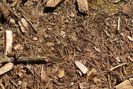 Dry ground with wood chips in the forest. forest soil with grass and twigs. nature background. forest ground backdrop Imagens