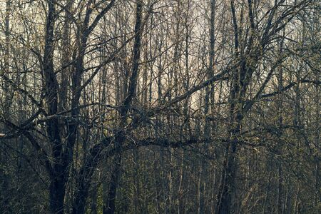 Dry trees in gloomy day. overgrown atmospheric forest Stock fotó
