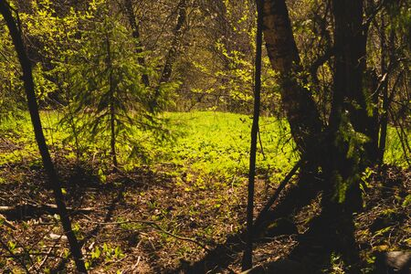 Sunny overgrown forest. grass and plants nature background. bushes and greenery