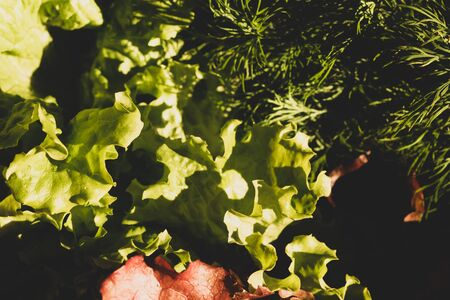 Lettuce salad and dill. organic vegetables. vegetarian nutrition. healthy food