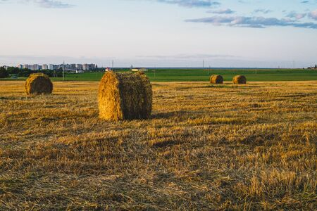 Rolled haystack. hay bale. agriculture field with sky. rural landscape. straw on the meadow. harvest in summer. farm in the countryside