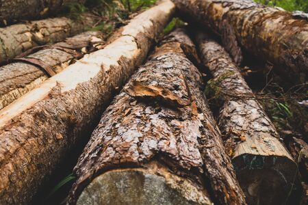 Pile of wooden logs. timber background. untreated wood