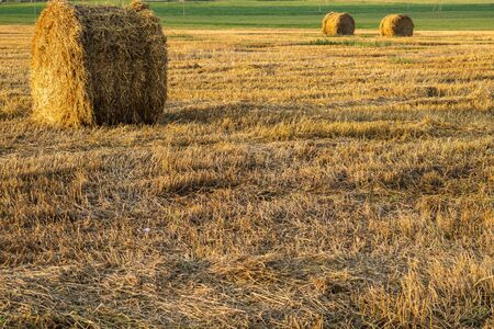 Rolled haystack. hay bale. agriculture field. rural landscape. straw on the meadow. harvest in summer. farm in the countryside Stok Fotoğraf