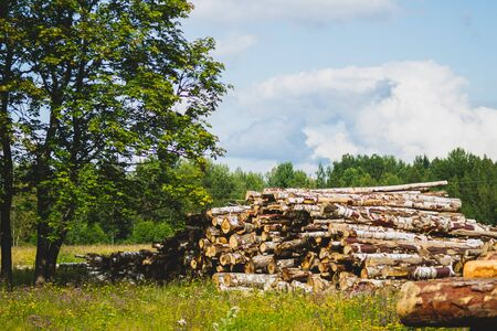 Wooden logs in the forest. chopped tree logs stack. nature landscape. pile of timber Stok Fotoğraf