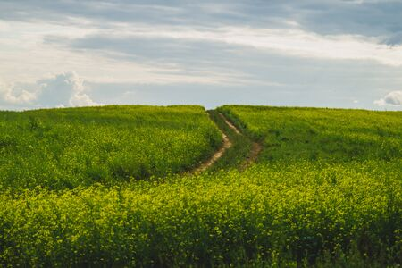 Beautiful valley. way through green meadows and hills. yellow flowering field. nature landscape with horizon line Stok Fotoğraf