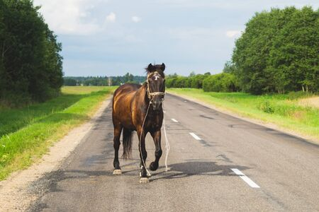 Lonely brown horse crossing the road. runaway horse in the countryside