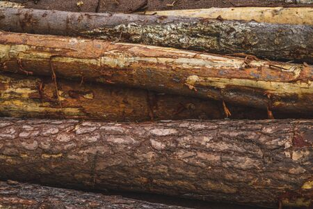Pile of wooden logs texture. timber background. untreated wood