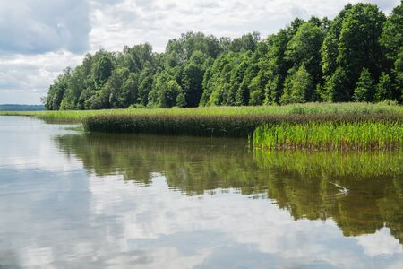 Green shore of the lake with the reeds and plants. forest near the water Stok Fotoğraf