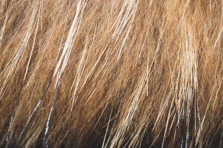 Brown fur fibers close up background. abstract macro texture of fluffy material Stockfoto