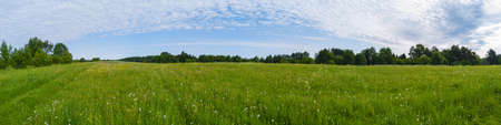 Field with grass and blossoms. countryside panorama