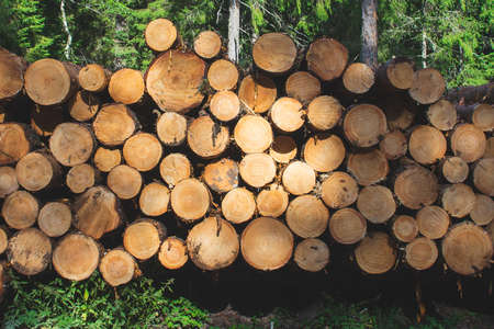 Stack of logs in the forest. timber cutting industry Foto de archivo