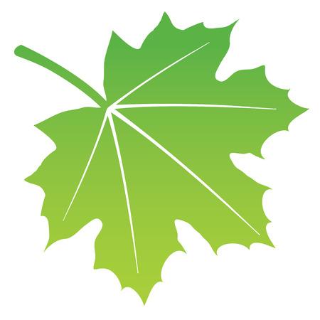 maple leaf: vector illustration of green leaf