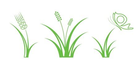 wheat grass: Green Nature Icons. Part 1 - Grass