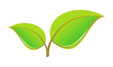 young leaf: Hojas  Vectores