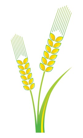 corn field: Agriculture Symbol on White Background