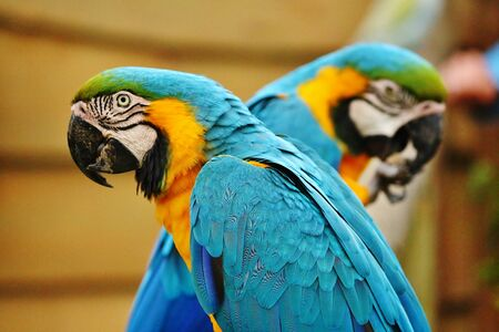 Two Parrots looking at opposite Directions