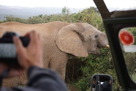 Tour Experience at Addo Elephant National Park
