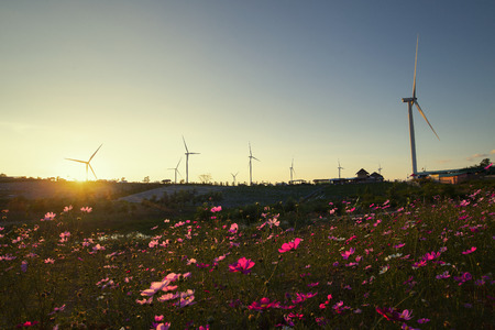 Wind turbine field and flower field, During sunset.