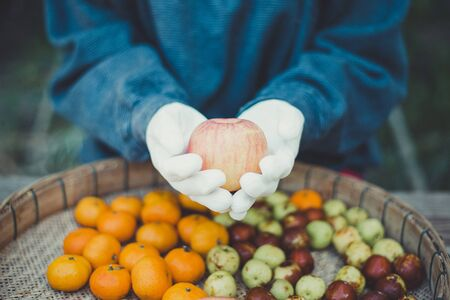 Fresh fruit from the farm, Apple in the hands of gardener, Close-up