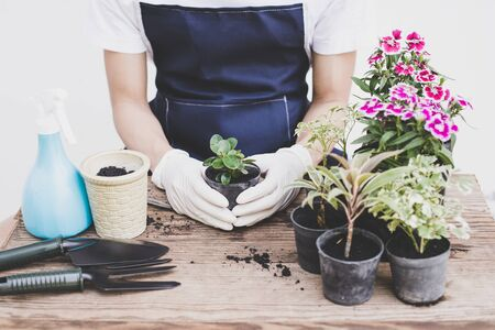 Decorate the house by planting trees, Backyard Flower Gardening, Close-up