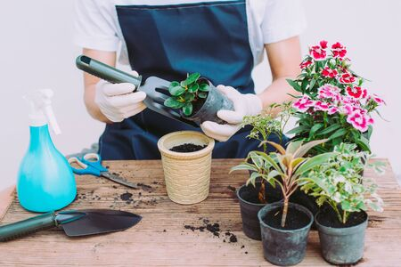 Decorate the house by planting trees, Gardeners are planting trees, Close-up