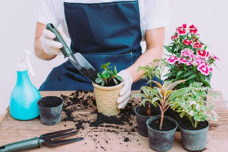 Decorate the house by planting trees, People are planting small trees, Close-up Stock Photo