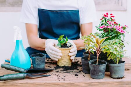 Concept of home gardening, Gardeners are decorating flower seedlings, Close-up Stock Photo - 138539947