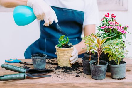 Concept of home gardening, Gardeners are giving water to seedlings, Close-up Stock Photo - 138540002