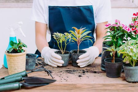 Concept of home gardening, Person holding two trees, Close-up  Stock Photo