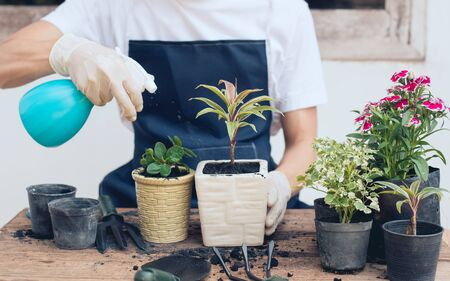 Make a small garden in house, Gardener are sprinkling water with trees.