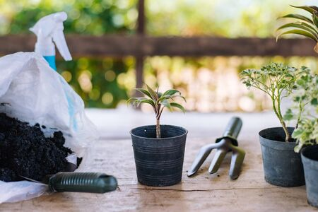 Gardening in the house, Focus on small trees, Copy-space. Stock Photo