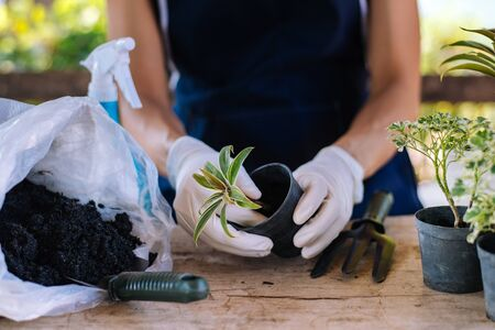 Gardening by yourself at home, Sort seedlings. Stock Photo - 139942426