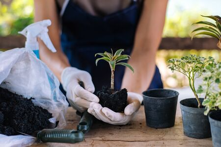 Gardening by yourself at home, Sort seedlings. Stock Photo - 139942229