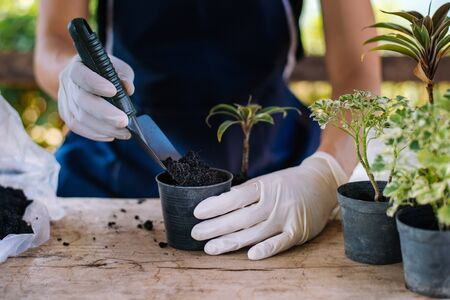 Gardening in house, Gardener prepares the soil in a vase, Close-up