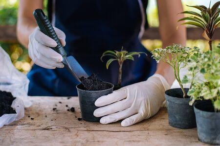 Gardening in house, Gardener prepares the soil in a vase, Close-up Stock Photo - 139940617