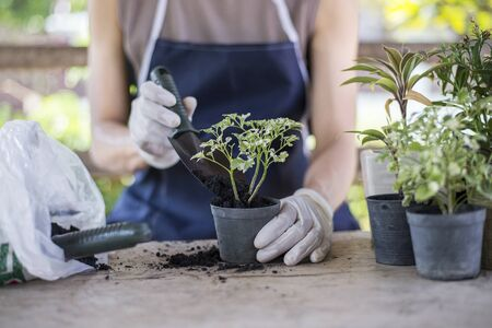 Make a small garden in house, People putting soil in pot, Close-up.