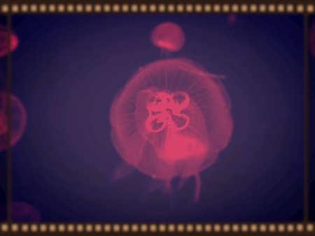 glow: Pink jelly fish