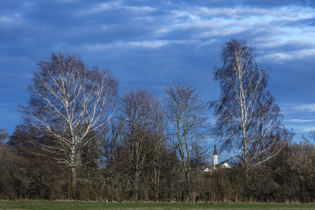 shrubbery: white church between branches behind shrubbery , trees and two sunny birches and cloudy sky